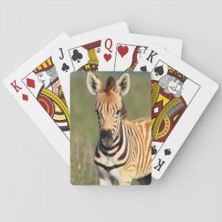 Plains Zebra (Equus Quagga) Foal Portrait Playing Cards