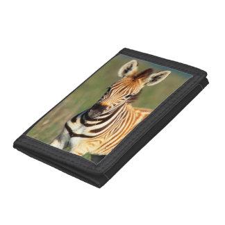 Plains Zebra (Equus Quagga) Foal Portrait Tri-fold Wallets