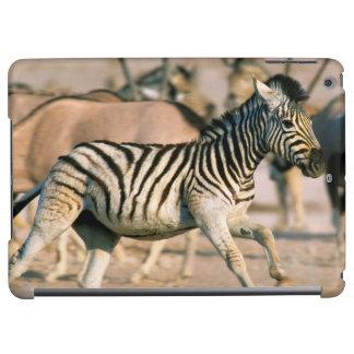 Plains Zebra (Equus Quagga) Foal Startled Cover For iPad Air