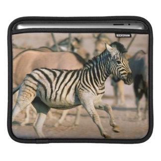 Plains Zebra (Equus Quagga) Foal Startled iPad Sleeves