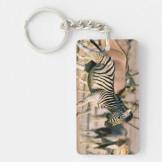 Plains Zebra (Equus Quagga) Foal Startled Double-Sided Rectangular Acrylic Keychain