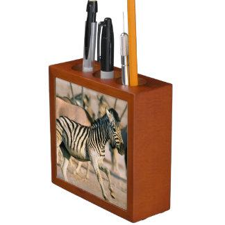Plains Zebra (Equus Quagga) Foal Startled Pencil Holder