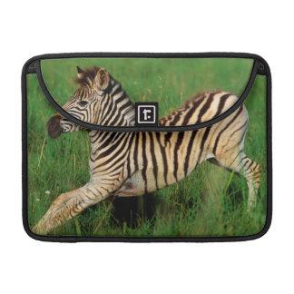 Plains Zebra (Equus Quagga) Foal Stretching Sleeve For MacBooks