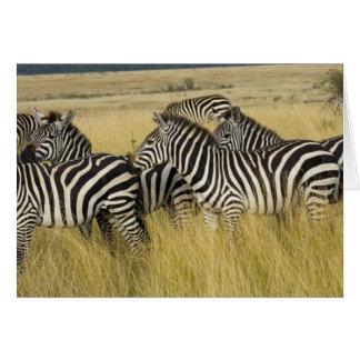 Plains Zebra (Equus quagga) in grass, Masai Mara 2 Greeting Cards