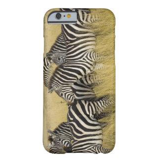 Plains Zebra (Equus quagga) in grass, Masai Mara 2 Barely There iPhone 6 Case