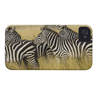 Plains Zebra (Equus quagga) in grass, Masai Mara 2 Case-Mate iPhone 4 Case