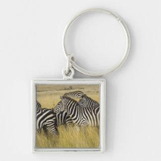 Plains Zebra (Equus quagga) in grass, Masai Mara 2 Keychain