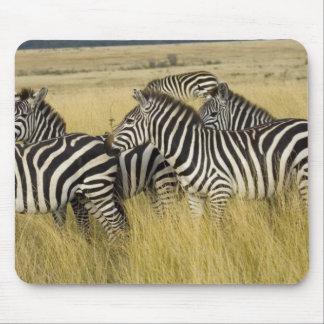 Plains Zebra (Equus quagga) in grass, Masai Mara 2 Mouse Pads