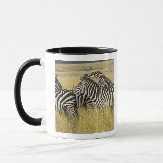 Plains Zebra (Equus quagga) in grass, Masai Mara 2 Mug