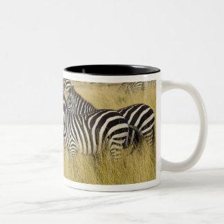 Plains Zebra (Equus quagga) in grass, Masai Mara 2 Two-Tone Coffee Mug