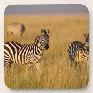 Plains Zebra (Equus quagga) in grass, Masai Mara Beverage Coaster