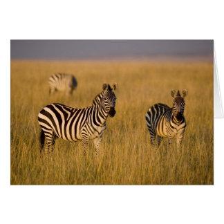 Plains Zebra (Equus quagga) in grass, Masai Mara Card