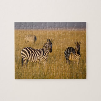 Plains Zebra (Equus quagga) in grass, Masai Mara Jigsaw Puzzle