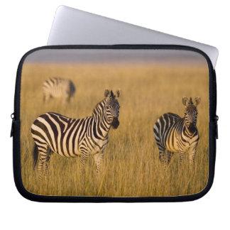 Plains Zebra (Equus quagga) in grass, Masai Mara Computer Sleeves