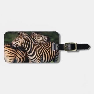 Plains Zebra (Equus Quagga) Pair Bonding, Tala Bag Tag