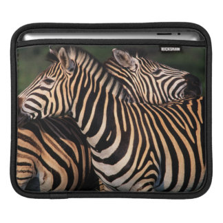 Plains Zebra (Equus Quagga) Pair Bonding, Tala Sleeves For iPads