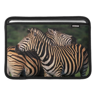Plains Zebra (Equus Quagga) Pair Bonding, Tala MacBook Air Sleeves
