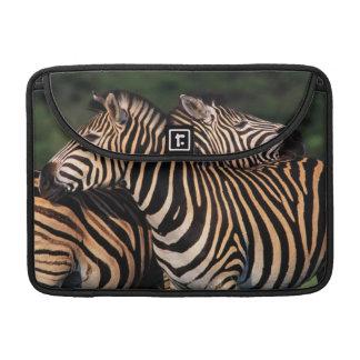 Plains Zebra (Equus Quagga) Pair Bonding, Tala Sleeves For MacBooks