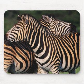 Plains Zebra (Equus Quagga) Pair Bonding, Tala Mouse Pad