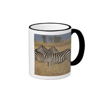 Plains Zebra (Equus quagga) pair grooming, Masai Ringer Coffee Mug