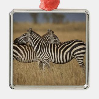 Plains Zebra (Equus quagga) pair grooming, Masai Christmas Ornament