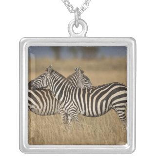 Plains Zebra (Equus quagga) pair grooming, Masai Square Pendant Necklace