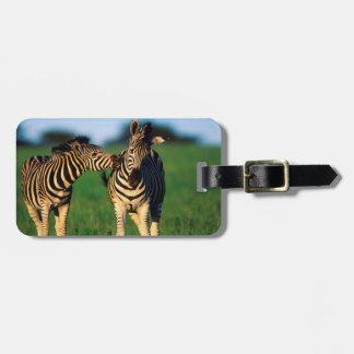 Plains Zebra (Equus Quagga) Pair Grooming, Tala Luggage Tag