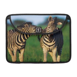 Plains Zebra (Equus Quagga) Pair Grooming, Tala MacBook Pro Sleeve