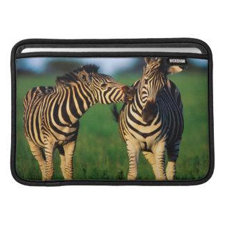 Plains Zebra (Equus Quagga) Pair Grooming, Tala MacBook Sleeve