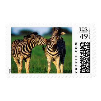 Plains Zebra (Equus Quagga) Pair Grooming, Tala Postage Stamp
