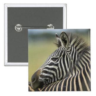 Plains Zebra (Equus quagga) pair, Haga Game Buttons
