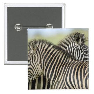 Plains Zebra (Equus quagga) pair, Haga Game Button