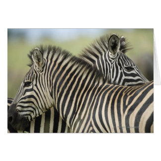 Plains Zebra (Equus quagga) pair, Haga Game Greeting Card