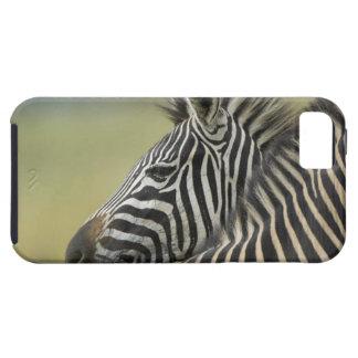 Plains Zebra (Equus quagga) pair, Haga Game iPhone 5 Cover