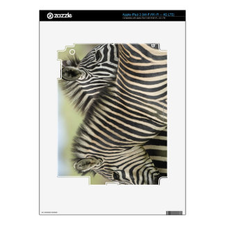Plains Zebra (Equus quagga) pair, Haga Game Decals For iPad 3