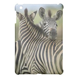 Plains Zebra (Equus quagga) pair, Haga Game Case For The iPad Mini