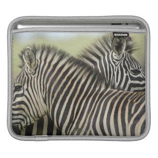 Plains Zebra (Equus quagga) pair, Haga Game iPad Sleeve