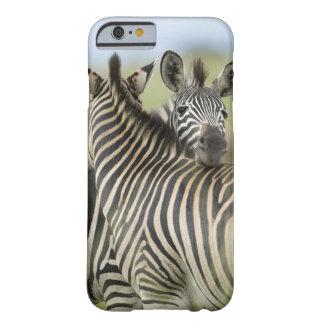 Plains Zebra (Equus quagga) pair, Haga Game iPhone 6 Case