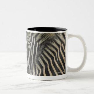 Plains Zebra (Equus quagga) pair, Haga Game Coffee Mugs