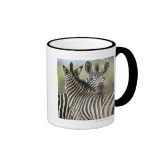 Plains Zebra (Equus quagga) pair, Haga Game Mugs