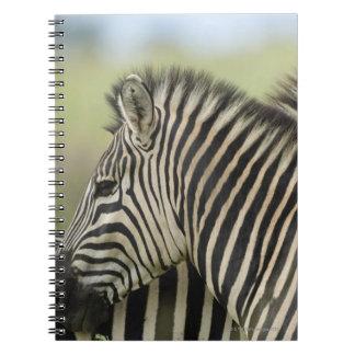 Plains Zebra (Equus quagga) pair, Haga Game Journal