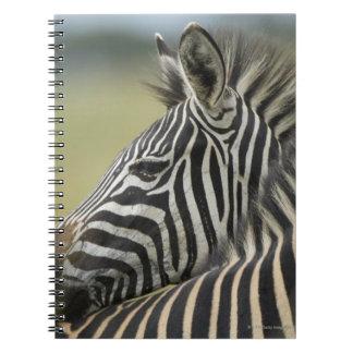 Plains Zebra (Equus quagga) pair, Haga Game Spiral Notebooks