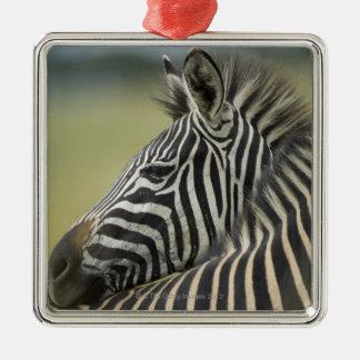 Plains Zebra (Equus quagga) pair, Haga Game Ornament