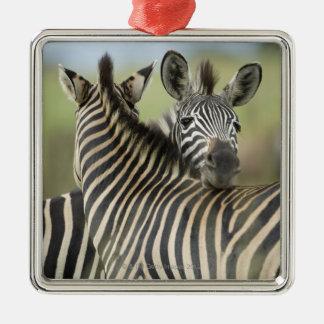 Plains Zebra (Equus quagga) pair, Haga Game Christmas Ornament