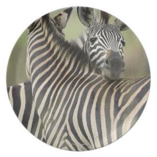 Plains Zebra (Equus quagga) pair, Haga Game Dinner Plates