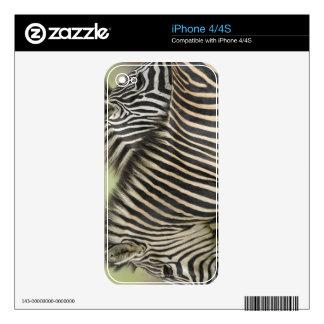 Plains Zebra (Equus quagga) pair, Haga Game Skin For The iPhone 4