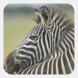 Plains Zebra (Equus quagga) pair, Haga Game Sticker