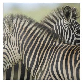 Plains Zebra (Equus quagga) pair, Haga Game Tiles