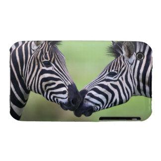 Plains zebra (Equus quagga) pair interacting iPhone 3 Case-Mate Cases