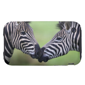 Plains zebra (Equus quagga) pair interacting iPhone 3 Tough Covers
